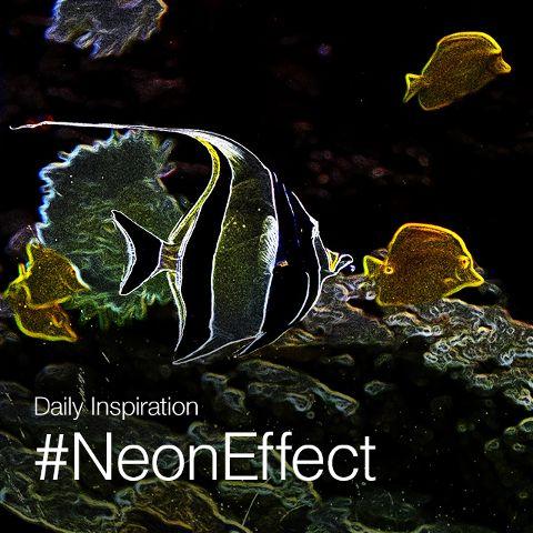dailyinspiration neoneffect