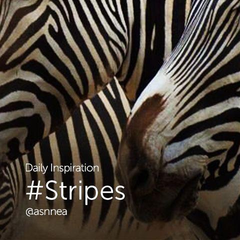 stripes images