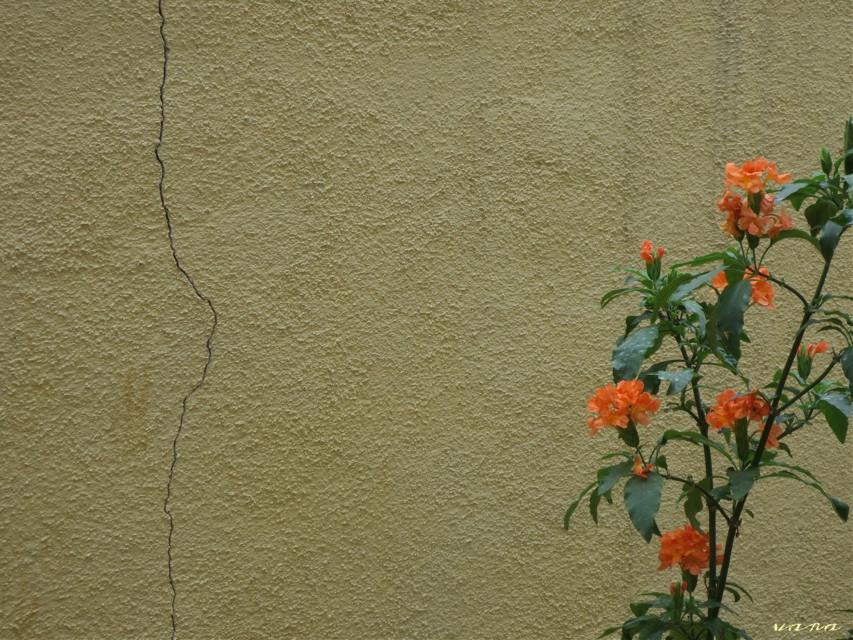 #orange #photography #wall