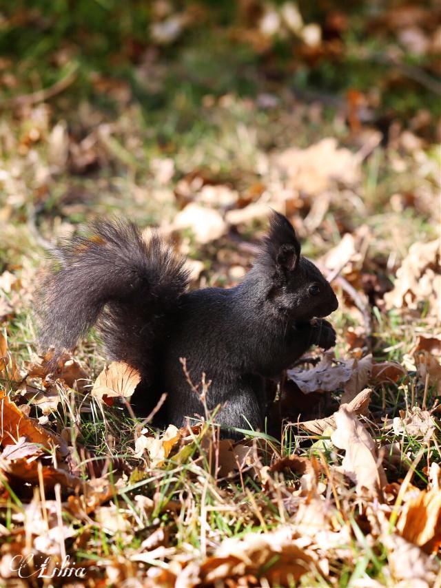 #squirrel #interesting #freetoedit