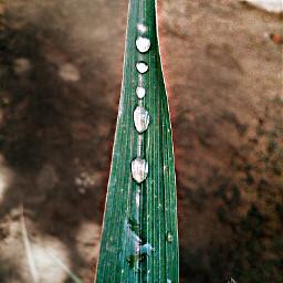 colorsplash hdr nature rain photography