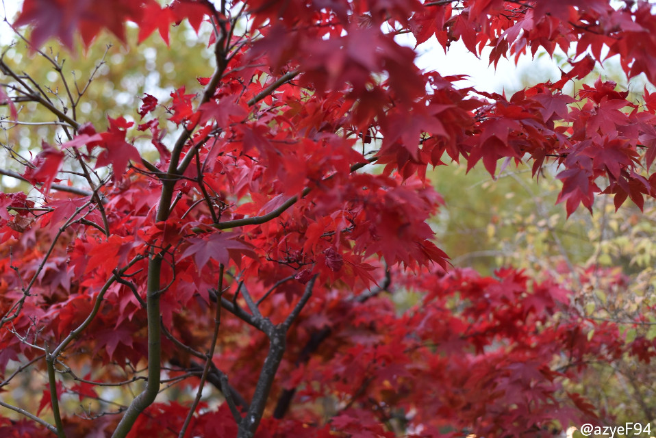 #autumn #photography #nature #colorful #wapautumn