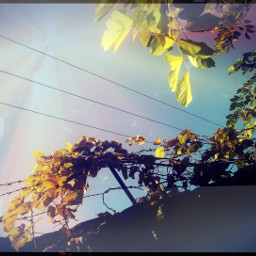 winter colorsplash photography