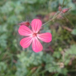 flower green nature pink
