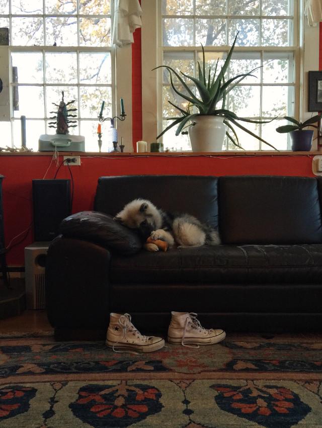 #puppy #dog #vermont #photo #photography #dpccozy