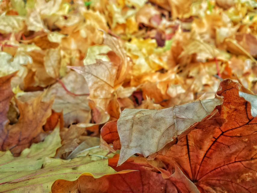 #colorful #picsart #autumn2015 #осень2015 #fallweather #colorful #fall #instafall #autumn #color #beautiful #seasons #falltime #nature #Россия #Москва #осень #Russia #season #love #Moscow #photooftheday
