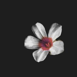 alone obscure solitude litter flower