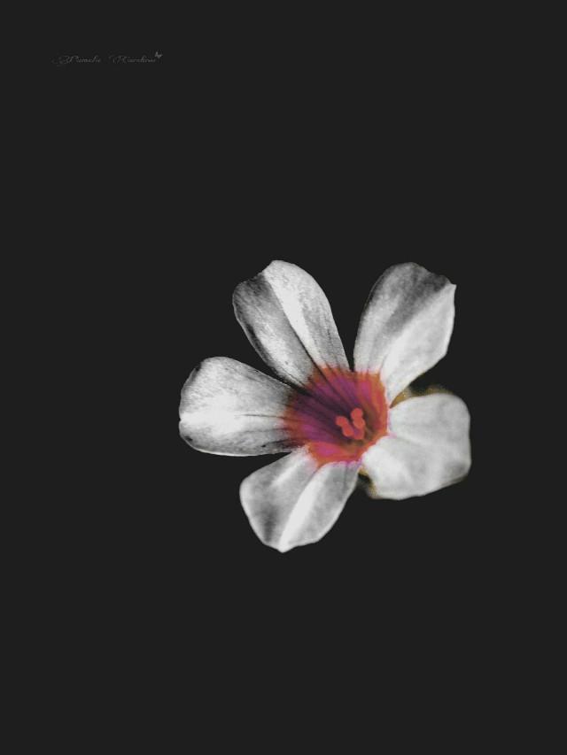 #Alone #obscure #solitude  #litter  #flower  A flor solitária