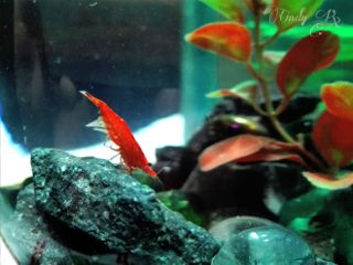 red nature shrimp cute photography