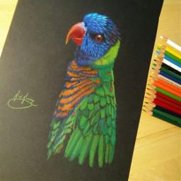 petsandanimals pencilart nature colorsplash colorful