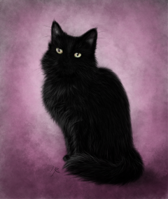 drawing digitaldrawing petsandanimals cat