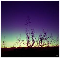 sunset lomoeffect sun sky art