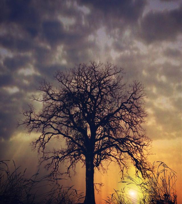#art #tree #sunrise #beautifulday #digitalart #brean sands somerset taken on the dunes in october #freetoedit