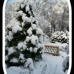 snowfall snow winter november photoaday
