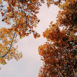 fall autumn fallcolors leaves orangeleaves