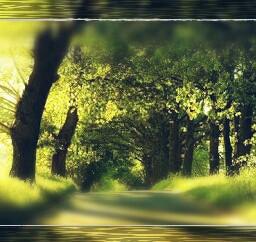 nature love jd