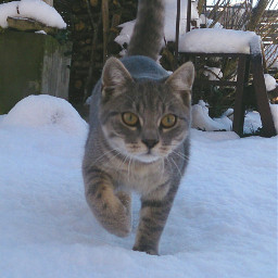 cat selfmade winter eyes cold