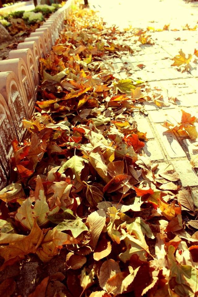 #photography  #autumn