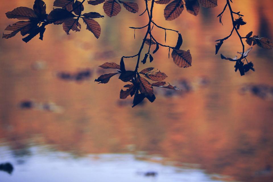 #autumn #photo #colors #wonderful #love #igers #colorful ##beautiful #doğa #nature #croatia