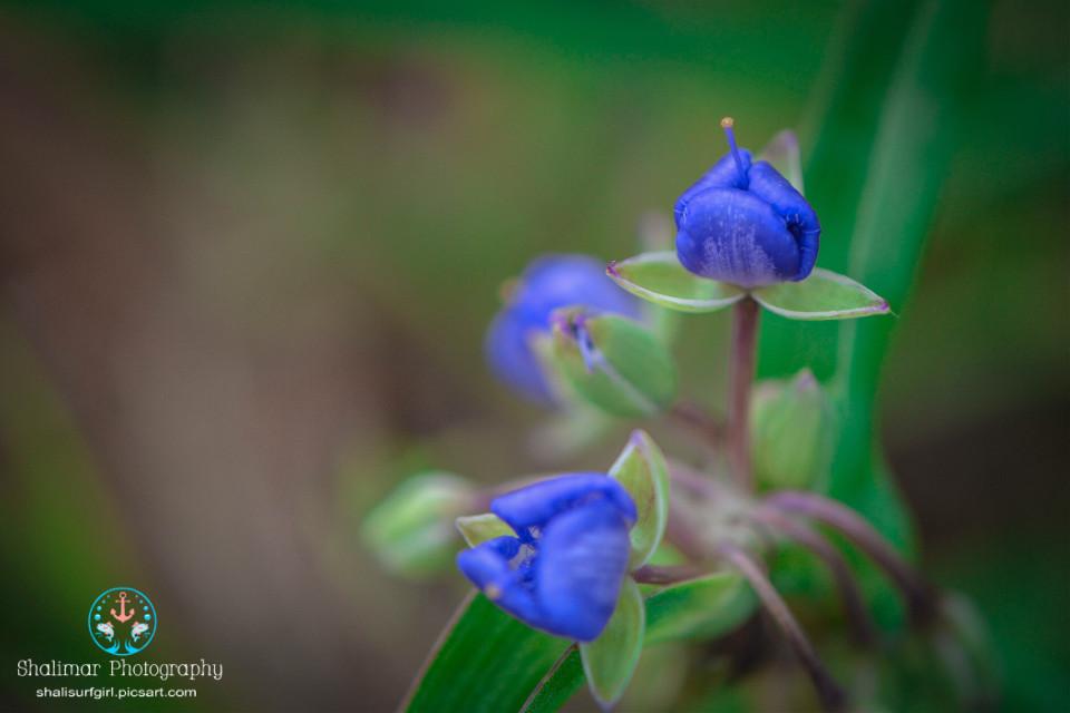 #wild #green #purple #wildflowers #flowers       #nature #natureaddict #natural #photography #nikonphotographers #nikond5200 #nikonistas #nikonnofilter #macro #macrophotography
