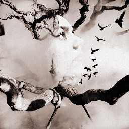 artistic tree birds photography