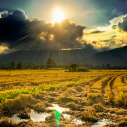 freetoedit hdr nature photography summer