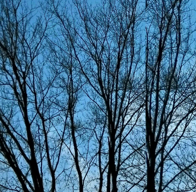#tree  Scott Banyash, Michigan. Smartphone photograph.