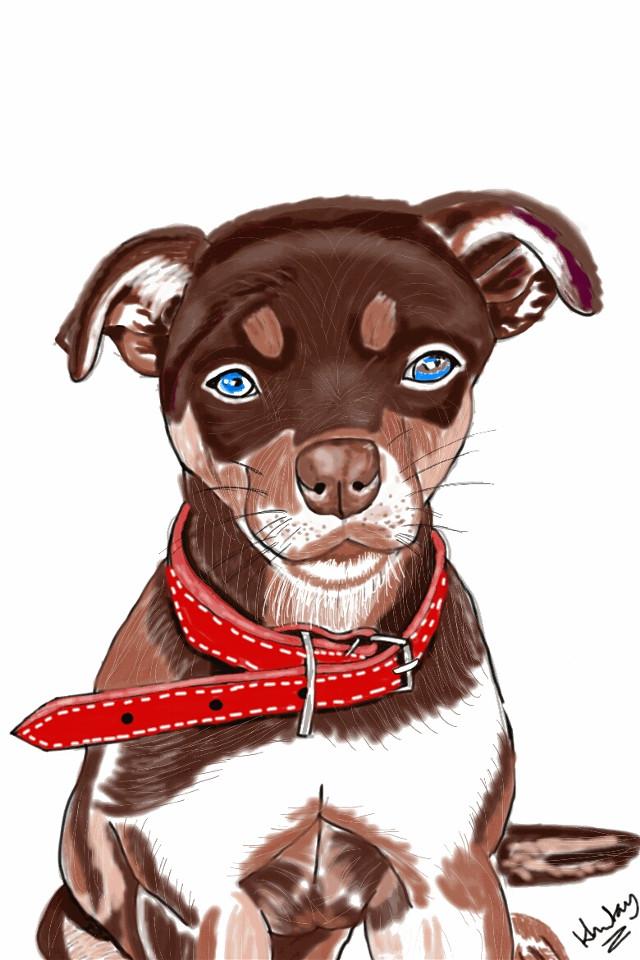 #dcmyimaginaryfriend #digitalpainting #digitalart #drawing #2016 #illust #illustration #art #colorful #petsandanimals  #dog  #symmetry