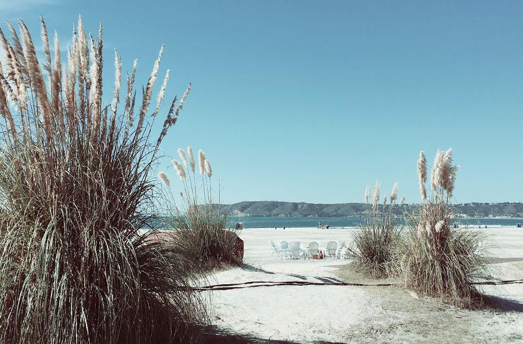 #lowcontrast #vintageivory #beach #california #coronado #freetoedit