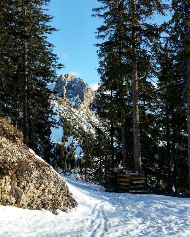 Between the trees  #forest  #snow # Allgäu #bavaria #mountains #winter #nature #travel #Allgäu #bavaria