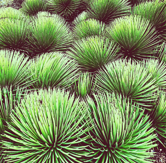#nature #botanicalgarden #berkeley #california #freetoedit