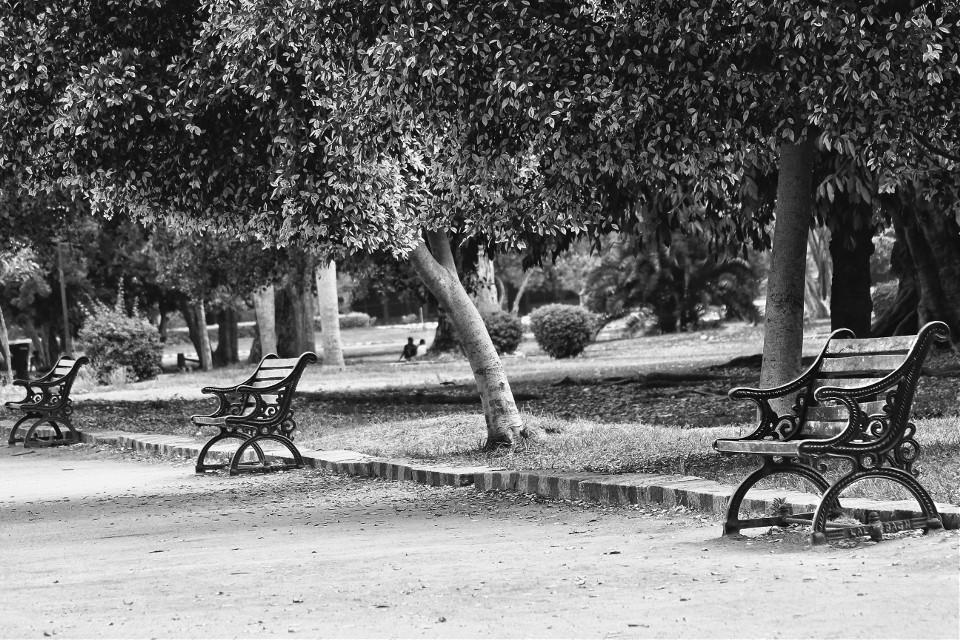 @pa #Silver #Park #Serenity #peace #life #nature #blackandwhite #black&White #chairs #bench #empty #park #trees #leaves #branch #perspective #emptychairs #freetoedit #openedit #hdr #photography #backlight #india #canon #picart #emotions #love #alone