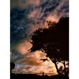 interesting nature sky photography tree
