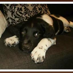 petsandanimals puppy mypet dog cute