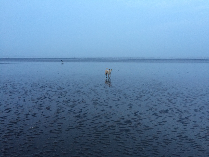 #beach #sea #water #pet #dog