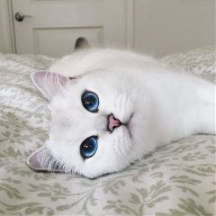 cat eyes photography cute