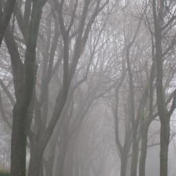 wppfog trees winter fog path wppspooky dpcfridaythe13th pcfoggy pcbadweather pcforest pcgloomyweather gloomyweather