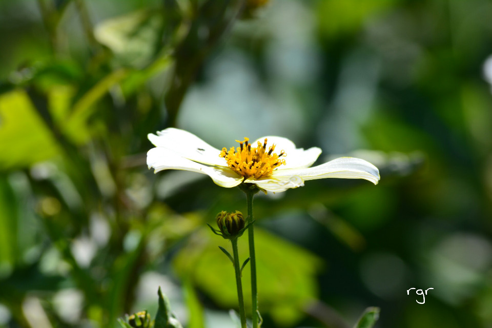 ;)) #flower #nature #photography