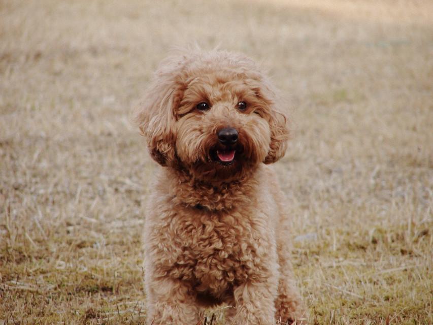 笑顔 #interesting #dog