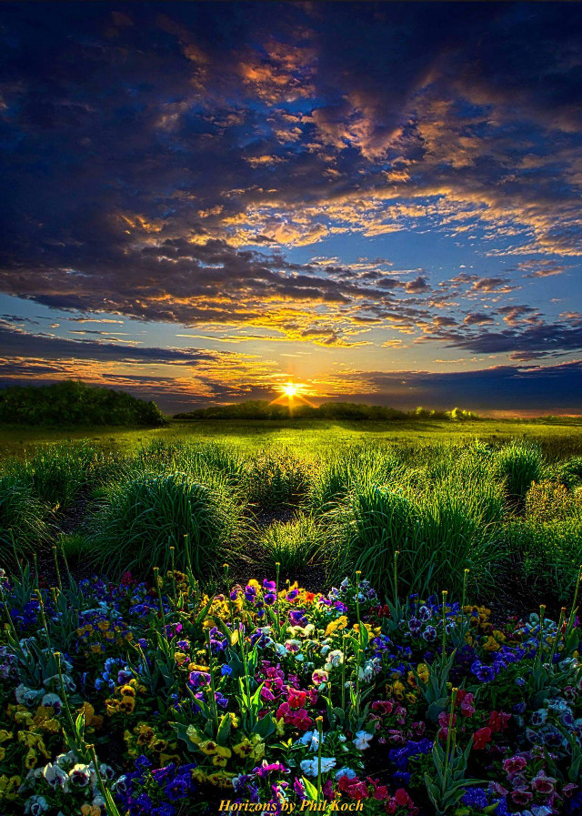 Horizons by Phil Koch.  #Flowers tulips #naturephotography #life #texture #clouds #light #rural #country #peace #sunrise #seasons #outdoors #spring #travel #colorful #flower #nature #photography