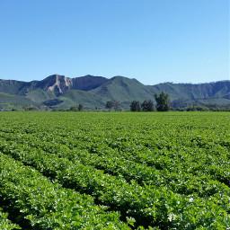 pconthefarm onthefarm wppsunnyday pcdownonthefarm downonthefarm pclandscapes pccolorgreen