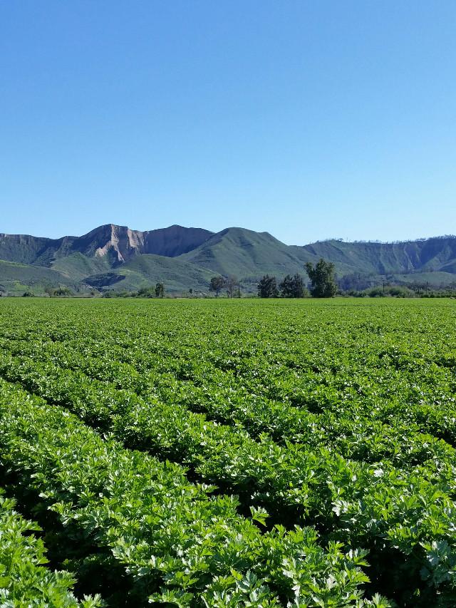 #wppsunnyday #pcdownonthefarm #downonthefarm #pclandscapes #landscapes #pccolorgreen #colorgreen