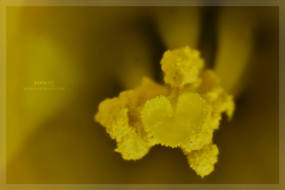 Ok my friends. Here is the next macro pic i shot. It is a part of the beautiful flower i posted before. It looks like a little heart, can you see it?  #flower #yellow #macro #closeup #details #plant #nature #photography #nikon #d7200 #narzisse