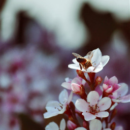 vintageivory vintageivoryeffect dailyinspiration bee blossoms photography