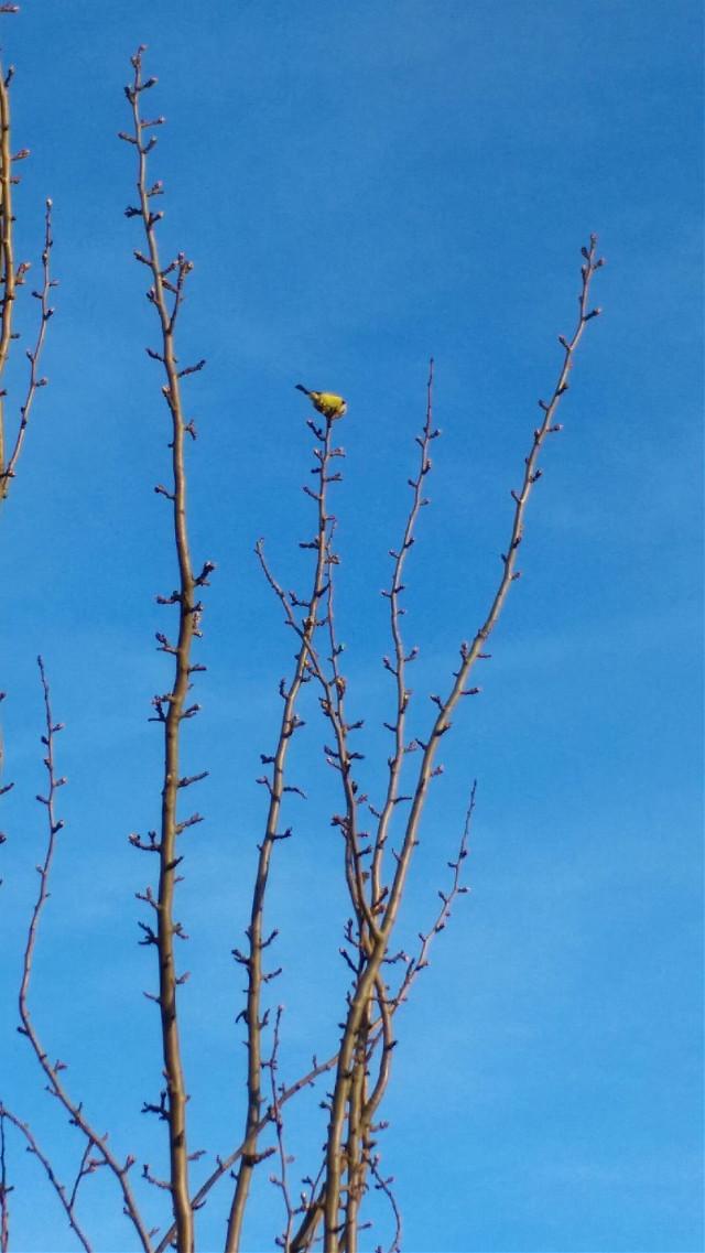 Hello EVERYBODY!🙋😘  #nature #photography #spring #petsandanimals  #noedit