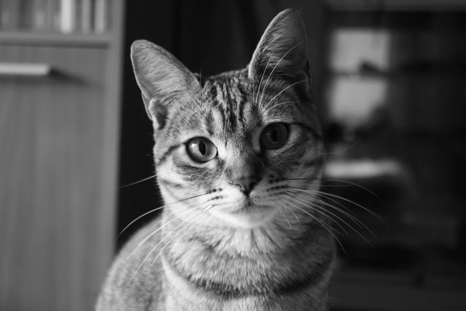 #baby #blackandwhite #cute #emotions #love #photography #petsandanimals #stella #cat #245