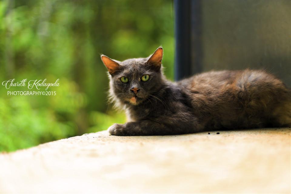#cute #photography #srilanka #canon6d #canonphotography #charithkodagodaphotography #look #cats #animal