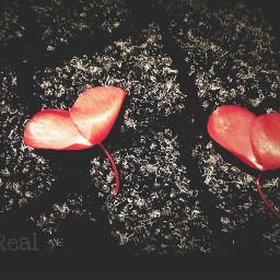 petali petaloso cuore heart palloncino