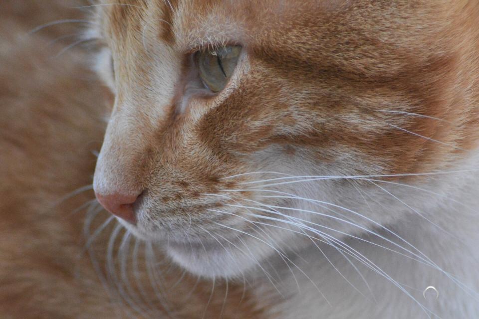 #cat #mustache #cute #pets&animals #photography