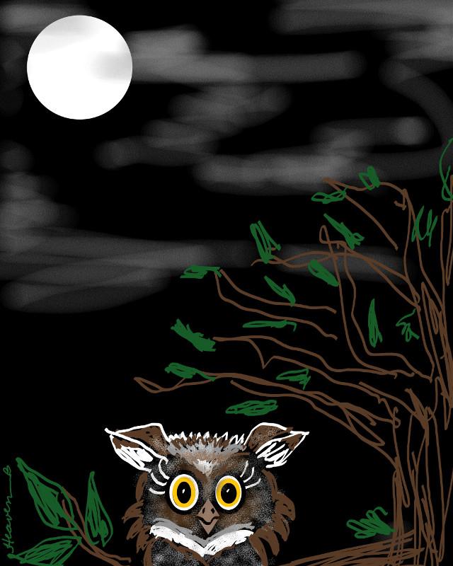 Midnight Owl My drawing of a cutie owl under the full moon.  #drawing #mydrawing  #drawingtools  #moon  #moonlight  #petsandanimals  #owl  #trees #sky #heaven  #darkness  #dark  #interesting
